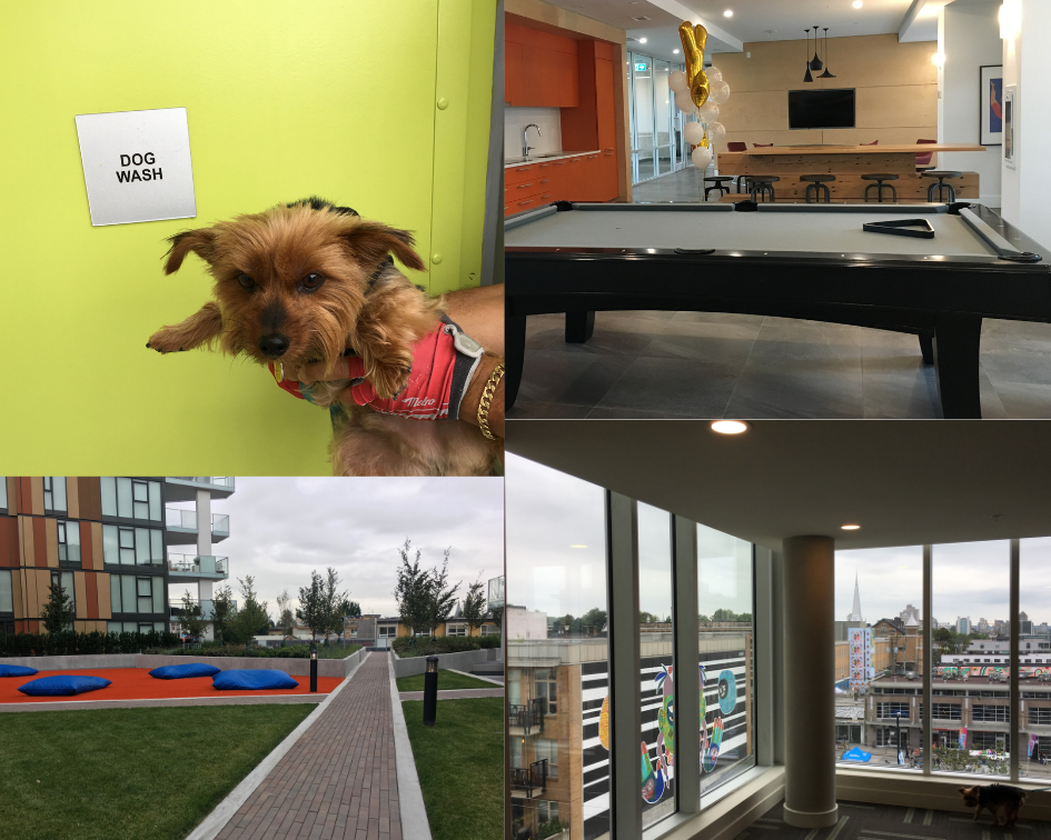 Images of the Independent Building dog wash, courtyard, recreation room and view